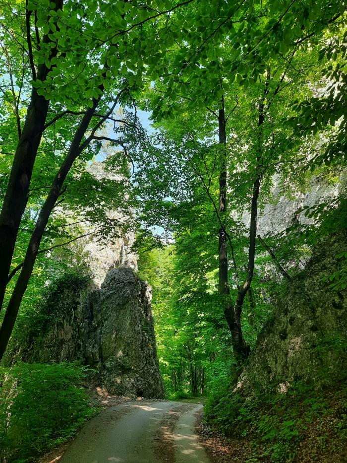 Czarcie Wrota Dolina Będkowska