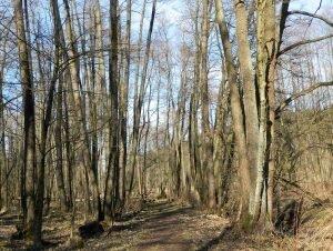 Dolina Aleksandrowicka