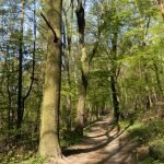 Lasek Młodziejowski