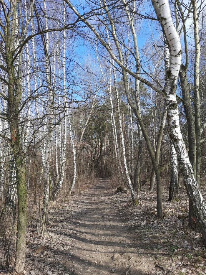 Las Młodziejowski
