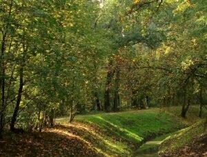 Lasek Łęgowski