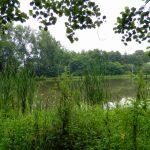 Las i stawy na Grabówkach