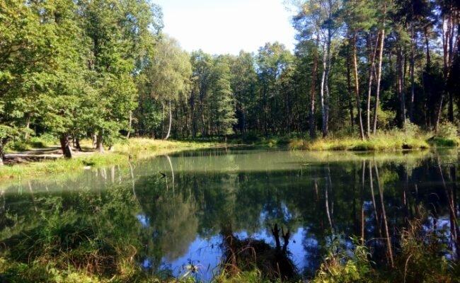 Puszcza Dulowska i czarny staw w Tenczynku