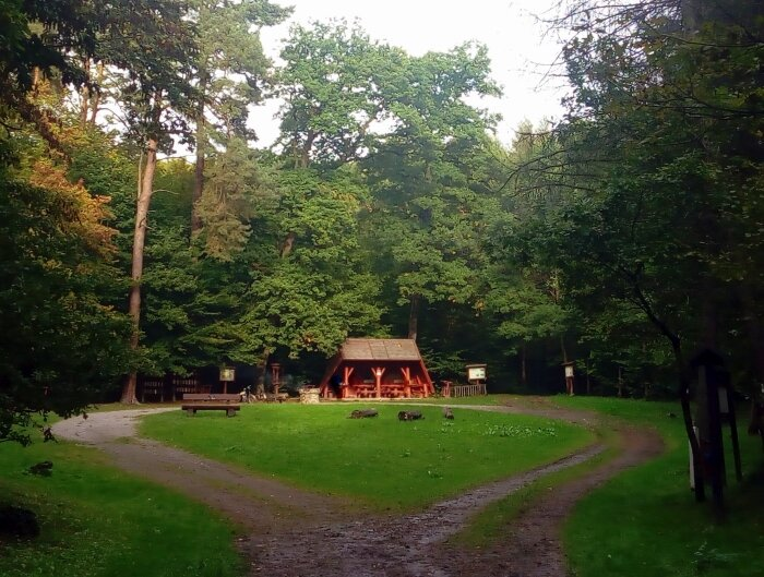 Las w Goszczy
