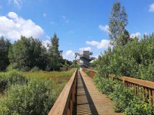 Wieża widokowa i kładki w Drwini