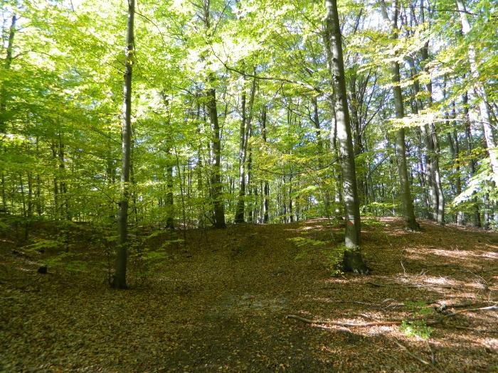 Rezerwat Pazurek
