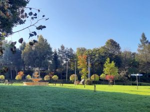 Nielepice - Skała z Krzyżem i Park Pileckiego